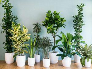 گیاهان آپارتمانی و پراکسیدین