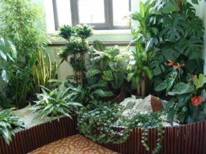 پراکسیدین و پرورش گیاهان