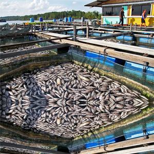 ضدعفونی استخر پرورش ماهی و میگو