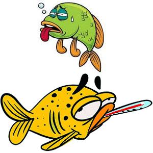 ماهی های بیمار