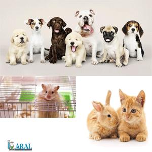 مراقبت از حیوانا خانگی