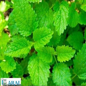 گیاهان دارویی -بادرنجبویه