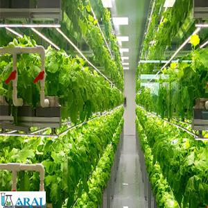 گلخانه های هیدروپونیک