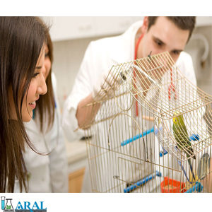 واکس پرندگان