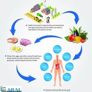 اثرات مثبت و منفی گوگرد بر سلامت انسان