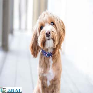بیماری مشترک انسان و حیواناتی مانند سگ وگربه